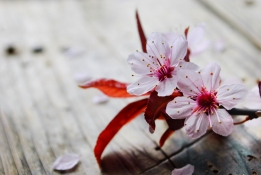 Ikigai Methode: Karriere mit Sinn